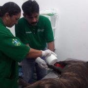 Más de 27 perritos han encontrado una nueva familia en Progreso