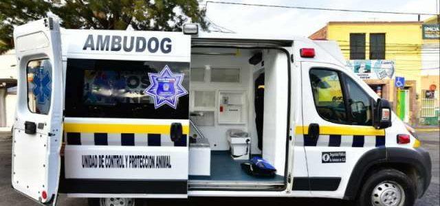 México tendrá su primera ambulancia para atender a perros atropellados o maltratados