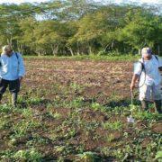 """Arranca en Yucatán """"Producción para el Bienestar"""""""