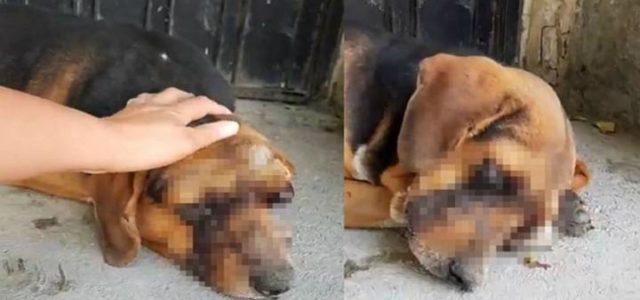 Máxima crueldad hacía un perrito, le sacan los ojos