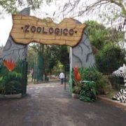 Fallece cebra en el zoológico