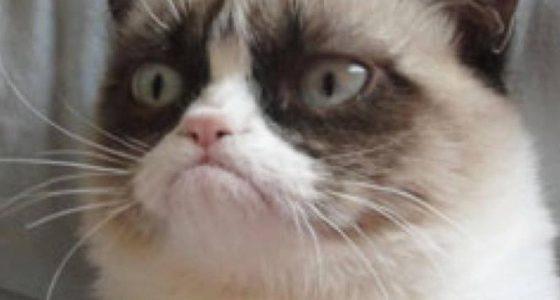 Siempre nos quedarán sus memes: ha muerto la gata 'Grumpy Cat'