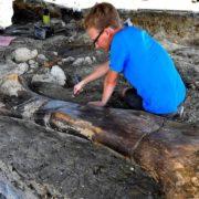 Gigantesco hueso de dinosaurio descubierto en Francia