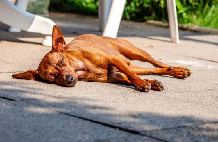 Perro muere en azotea al ser abandonado sin comida ni agua