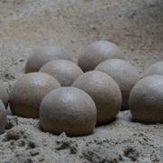 Niño encuentra un nido de huevos de dinosaurio de 65 millones de años en China
