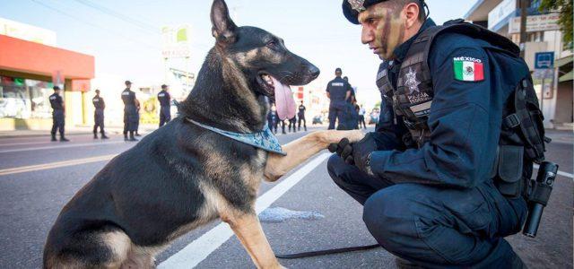 Oficiales caninos jubilados se reúnen con sus familias adoptivas