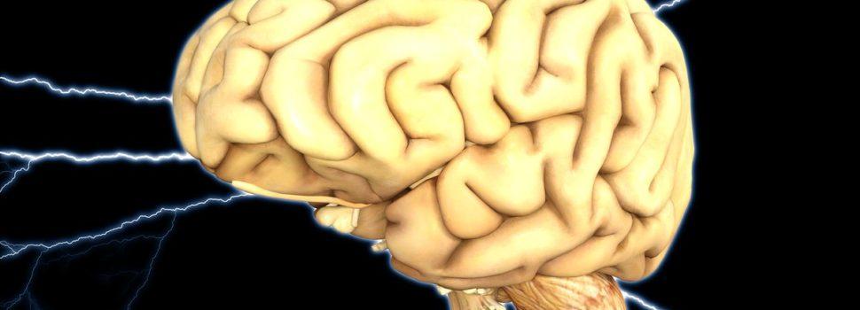 La ciencia ya sabe cómo volver a la vida el cerebro de un humano muerto