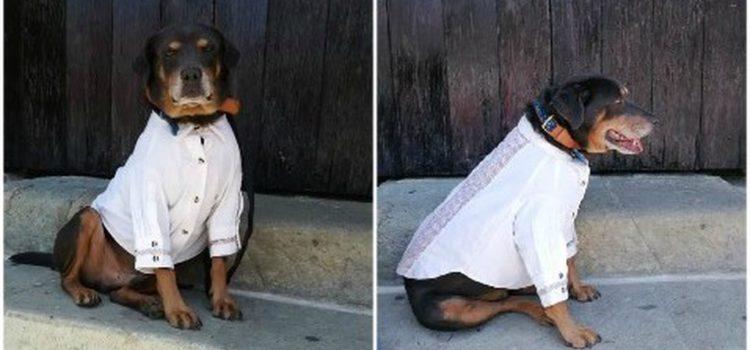 Alcalde en Oaxaca pone guayabera a perro 'Mazapán para la Guelaguetza y lo critican