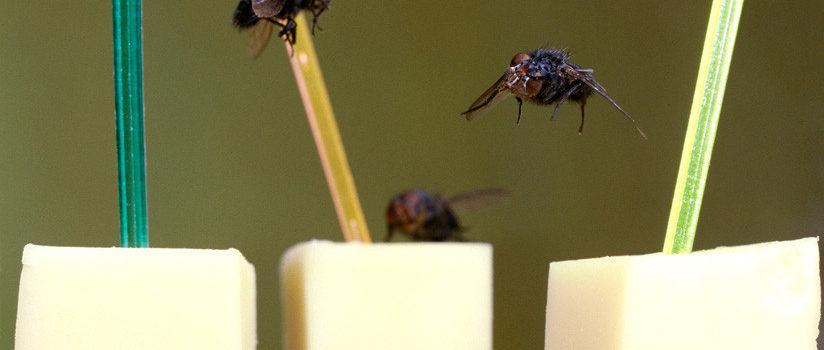 Un restaurante se llena de carteles con el número 58… para espantar moscas