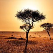 Julio fue el mes más caluroso de los últimos 140 años en el planeta
