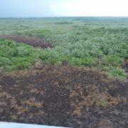 Se controla incendio forestal cerca de la Reserva de Celestún