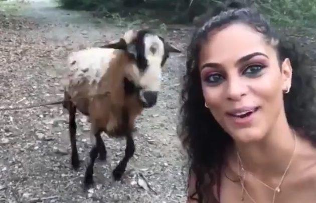 Intenta tomarse una selfi con una cabra pero el animal tenía otro plan