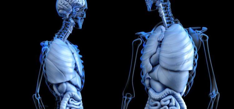 No fue el cerebro, sino la pelvis la que cambió la historia de la humanidad