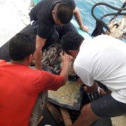 Elementos de la IX Zona Naval rescataron a pescadores cuya embarcación se averió frente a Progreso