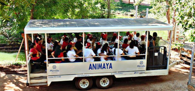 El lunes Animaya abrirá sus puertas para que las familias disfruten el asueto en sus instalaciones