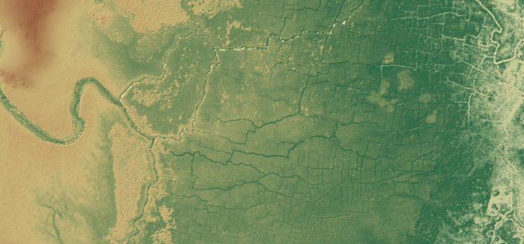 Hallan una enorme red de canales y cultivos mayas oculta bajo la selva