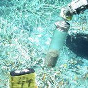 Científicos rusos extraen nuevo antibiótico de una bacteria que habita en el suelo de una selva de Veracruz