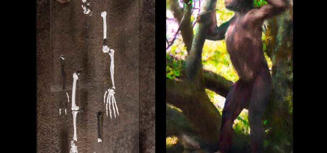 Fósil de 11 millones de años explicaría cómo empezó a caminar el hombre