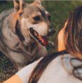 Besar a mascotas podría afectar el hígado y los pulmones