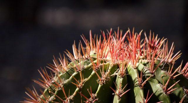 La historia de un emprendedor que enseña a cultivar cactus