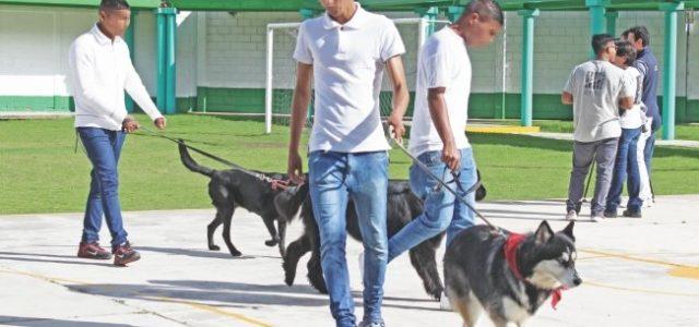 Perros e internos: asistencia mutua