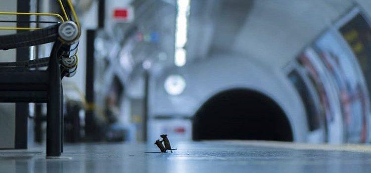 Pelea de ratones en el metro de Londres, mejor foto de naturaleza del 2019