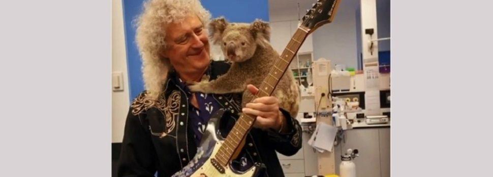 Brian May, el guitarrista de Queen, da un 'concierto privado' para un koala salvado de los incendios en Australia