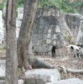 """Inicia la segunda etapa de la """"Operación Rescate Perritos de Kukulkán"""" en Chichén Itzá"""