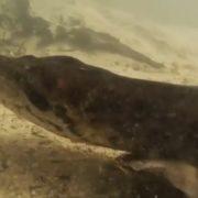 Buzo se encontró de frente con una anaconda de 7 metros