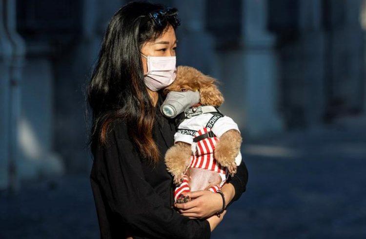 ¡Ni los perritos se salvan de coronavirus! En Hong Kong, mascotas están en cuarentena