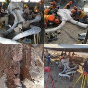 Hasta ahora han sido hallados restos de 60 mamuts en aeropuerto de Santa Lucía