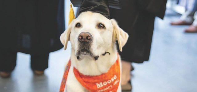 Perrito de terapia recibe doctorado por universidad de Estados Unidos