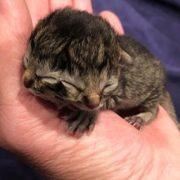Nace extraño gatito de dos caras y 'roba suspiros' en redes sociales