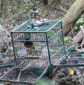 Detenidos tres personas por cazar pajaritos en Cholul