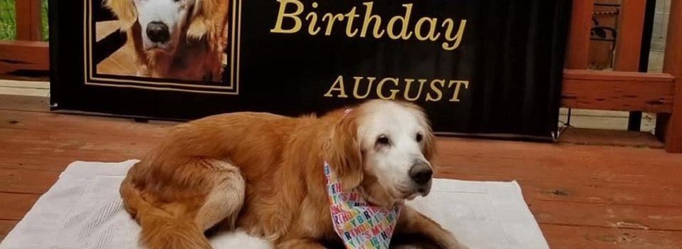 Perro August cumple 20 años; se convierte en el Golden Retriever más longevo