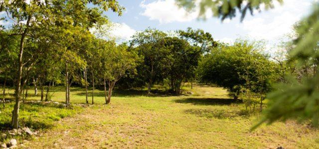 Reserva Cuxtal pide consulta pública para que en sus terrenos pase el Tren Maya