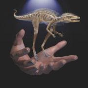 Descubren fósil de dinosaurio más pequeño que un teléfono celular