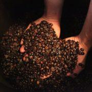 La UNAM crea gel y parche de cafeína para controlar obesidad