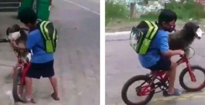 Niño le pone cubrebocas a su perro que lo acompaña a la tienda y se hace viral