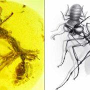 """Descubren fósil de """"hormiga asesina"""""""