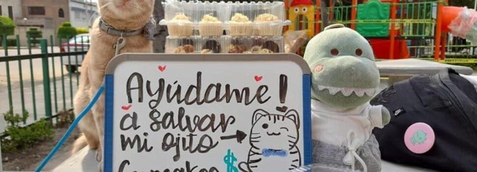 Este gatito vende cupcakes para pagar su operación