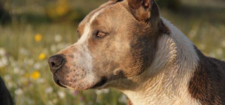 ¡No más cortar orejas y cola a mascotas! Prohíben mutilaciones animales en Tamaulipas
