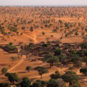 Descubren Millones de árboles en el Sahara