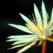 Estas son las flores más caras del mundo