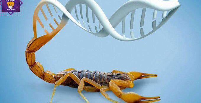Por medio del veneno del alacrán, desarrollan toxina que inhibe el cáncer